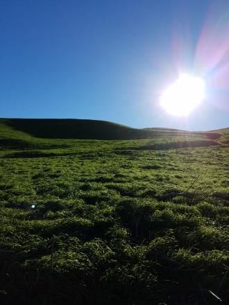 sun-and-green-flat